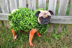 Woof! Announcing the Winners of Our Dog Costume Contest! | Brit + Co