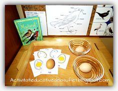 Despre pasari. Activitati educative (2 ani si 8 luni) Montessori, Spring Activities, Stickers, Cards, Maps, Playing Cards, Decals