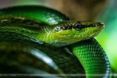 Snake by Peter Knütter on 500px