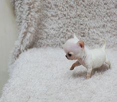 OMG! How cute!