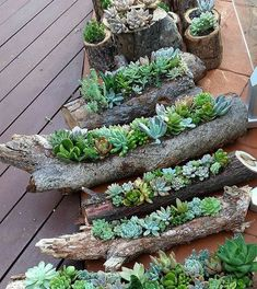 Great idea for succulents