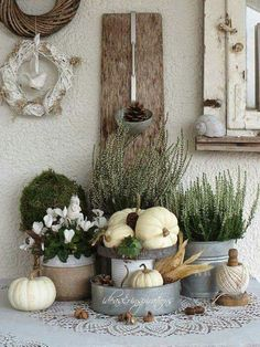 White pumpkins, galvanized containers and plants. Lovely for early Autumn. White pumpkins, galvanized containers and plants. Lovely for early Autumn. White Pumpkins, Painted Pumpkins, Fall Home Decor, Autumn Home, Early Autumn, Autumn Garden, Pumpkin Flower, Autumn Display, Farmhouse Decor