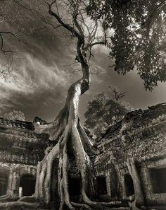 14 ans de photographies à la recherche des arbres millénaires | Buzzly