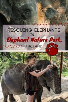 Discover the awesome, eco-friendly activity in Chiang Mai, Thailand - Rescuing Elephants in Elephant Nature Park. A visit to an Elephant Jungle Sanctuary is a good idea if you travel with kids or on your own. You'll have the best time feeding and playing Visit Thailand, Thailand Travel, Elephant Nature Park Thailand, Thai Travel, Ultimate Travel, Adventure Is Out There, Travel With Kids, Southeast Asia, Adventure Travel