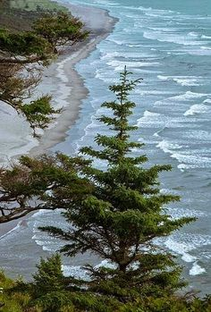 North Head Bluffs, Cape Disappointment State Park - Holiday$pots4u