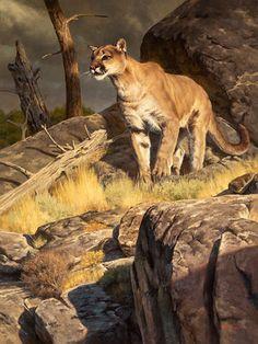 The Art of Dustin Van Wechel is an online gallery showcasing the work of award-winning American artist, Dustin Van Wechel. Wildlife Paintings, Wildlife Art, Animal Paintings, Big Cats Art, Cat Art, Animal Painter, Mountain Lion, Le Far West, Cat Life