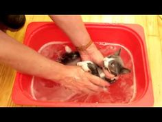 Simple Ways to Protect your Pets from Fleas - Orkin Pest Control - YouTube