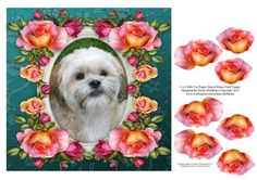 8 x 8 Shih Tzu Puppy Dog Roses Card Topper Decoupage on Craftsuprint designed by Elaine Sheldrake - Everyone loves a Shih Tzu and this one is gorgeous. Framed by beautiful roses this lovely dog is sure to melt the hearts of everyone who loves these little puppy dogs. This 8 x 8 card topper can easily be made smaller by simply printing two of these sheets onto A4 photo paper. - Now available for download!