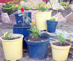 Stretch your garden dollar by spray painting pots you already have to add more color to your garden. This project can cost just the price of the spray paint if  you already have some pots!