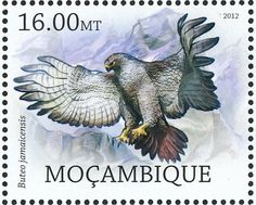 Red-tailed Hawk stamps - mainly images - gallery format