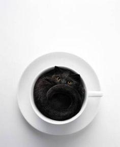 black in #white - #cat in a #cup