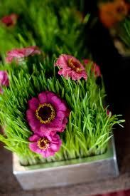 decorative wheatgrass - maybe with yellow or purple flowers?