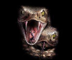 Snake Painting, Snake Drawing, Snake Art, Medusa Tattoo, Snake Tattoo, S Tattoo, Snake Wallpaper, Animal Wallpaper, Beaux Serpents