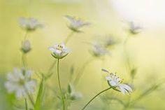 Spring van Teuni's Dreams of Reality op canvas, behang en meer Macro Flower, Macro Photography, Flower Photography, New Green, Flower Photos, Wild Flowers, Spring, Canvas, Plants