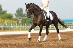 Each time you school, you have a chance to improve your horse's way of going. Walking Poles, Horse Exercises, Best Stretches, Horseback Riding, Easy Workouts, Dressage, Equestrian, The Incredibles, Horses