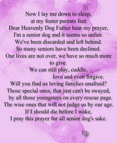 Senior dog prayer