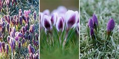 Counting down the days and minutes - Your Garden Matters - March 2011…
