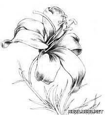 """Результат пошуку зображень за запитом """"как нарисовать лилию карандашом поэтапно"""""""