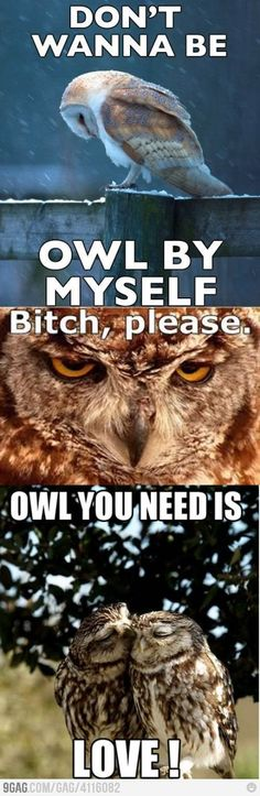 This gave my life a little scrap of meaning. :) <3 owls!
