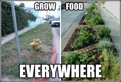 """""""Growing Your Own Food is Like Printing Your Own Money"""" 