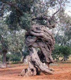 alberi monumentali - Abruzzo
