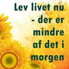 Lev livet