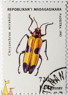 Jewel Beetle. Madagascar  http://stamps.livingat.org/Search.aspx?nav=Search=country=/Madagascar_ctl00$ContentPlaceHolder1$GridControlContent=0=Africa%2fMadagascar%2fDSC_5596.jpg