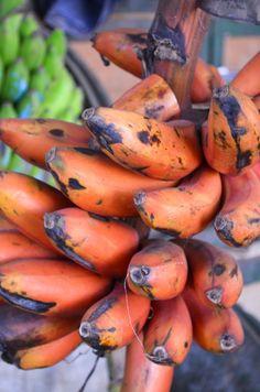 "mollyinkenya: "" RED bananas at the Mombasa Spice Market! Photography by mollyinkenya. Musa Banana, Banana Fruit, Banana Plants, Exotic Fruit, Tropical Fruits, Fruit And Veg, Fruits And Vegetables, Vegetable Pictures, Strange Fruit"