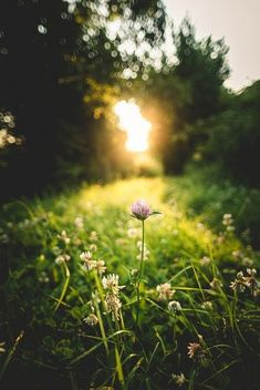 awake When the day wakes and the sun shines between the trees, a new adventure begins. Beautiful photo of a sunrise on a meadow in the forest.
