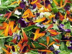 The English Garden: Edible Florals : Gardenista
