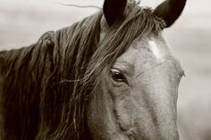 Horse Photograph Black and White Mystical by ApplesAndOats on Etsy, $25.00