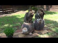 庭とねこ4。-The garden and Maru&Hana 4.- - YouTube