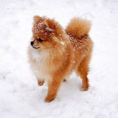 Baby Animals Super Cute, Cute Baby Dogs, Cute Little Puppies, Cute Dogs And Puppies, Cute Little Animals, Doggies, Baby Animals Pictures, Cute Animal Pictures, Animals And Pets