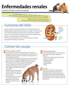 Enfermedad renal #riñón
