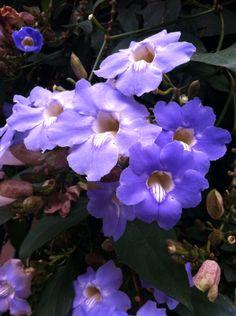 Linda essa flor azul!