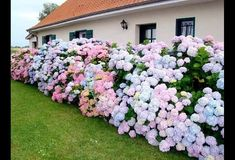 Best Garden Decorations Tips and Tricks You Need to Know - Modern Love Garden, Garden Care, Dream Garden, Hortensia Hydrangea, Hydrangea Garden, Hydrangeas, Hydrangea Landscaping, Front Yard Landscaping, Beautiful Gardens