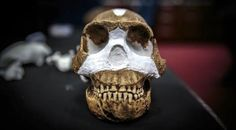 The discovery of a new species of human relative announced at South Africa's cradle of humankind.