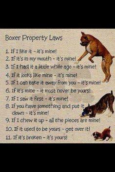 boxer law
