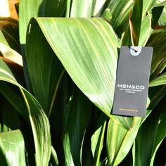 Green green green!  #lovemassana #massana #homewear #plants #gardening #flowers #clothing #fashion #goodnight #inspiration #photography #instadaily #green #leaves #landscape #view