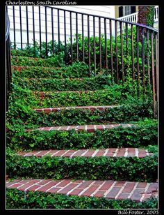 Ivy stairs from right here in Charleston, SC Charleston Sc, Ivy, Favorite Things, Stairs, Outdoor Structures, Stairway, Staircases, Charleston, Hedera Helix