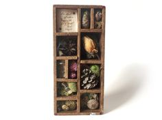$48 Shakespeare Quote Nature Assemblage — a lovely collection from nature #etsygifts #shakespeare #assemblage
