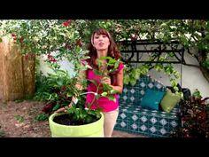 Como sembrar plantas sin tierra - Vida a lo Verde - YouTube