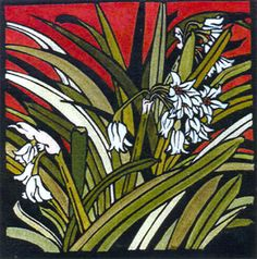 Onion FLowers by Kit Hiller - printmaker - Tasmanian artist