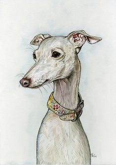 Lovely drawings of all different kinds of dogs. Great colors.