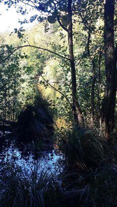 Wunderbare Farben der Buchenwälder Rügens im Herbst   sonniger Herbst am Herthasee im Nationalpark Jasmund (c) Frank Koebsch (3)
