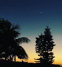 少しずつ日が長くなってきてますねサーフタイムが増えウエットスーツもいらなくなる夏が待ち遠しいです #沖縄#恩納村#三日月#綺麗 #黄昏#西海岸シーナサーフ#サーフィンスクール#空 #okinawa#onnason#moon #sky #tree #夏が待ち遠しい #サーフタイム