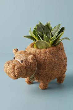 Hippo Planter | Anthropologie Waste Art, Coconut Hair, Natural Home Decor, Nature Decor, Crafty Craft, Autumn Home, Home Gifts, Indoor Plants, Whimsical