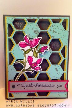 Hexagon Hive and Backyard Basics