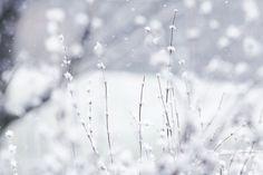 Google képkeresési találat: http://fc08.deviantart.net/fs70/i/2009/361/5/1/winter_wonderland_wallpaper_by_DyingBeautyStock.jpg