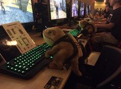 Ollie the Guar is battling it out in Guar v Guar at QuakeCon.